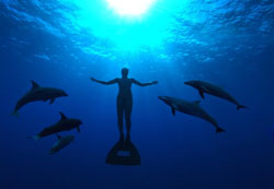 man and dolphins