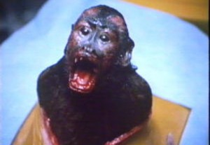 Monkey Shines is quality entertainment from director George A. Romero.